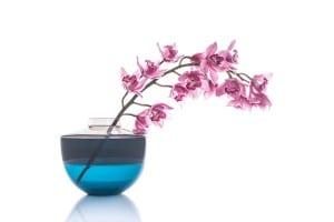 Orchidee in Vase vor weißem Hintergrund