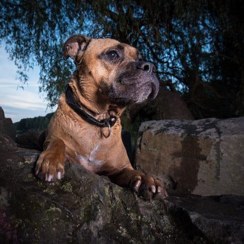 Hund Outdoor Portrait