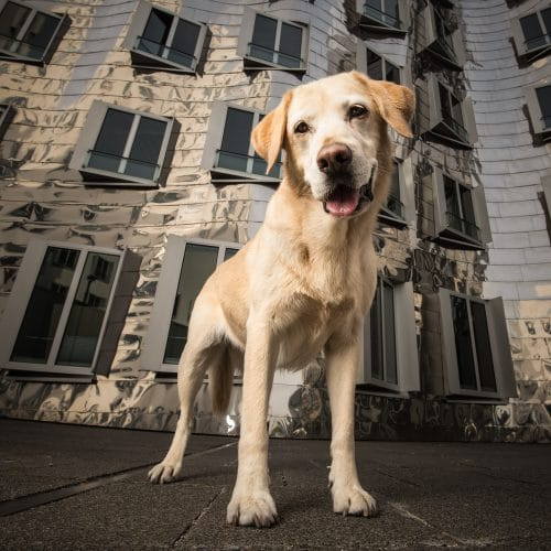 Hundeportrait im urbanen Umfeld