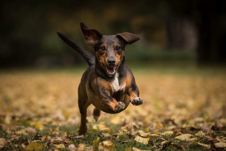 Hund in Aktion