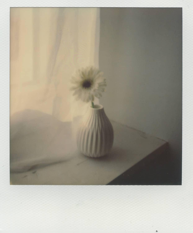 Blume auf Fensterbank auf Polaroid