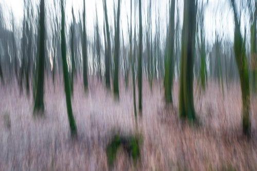 Wald mit Bewegungsunschärfe