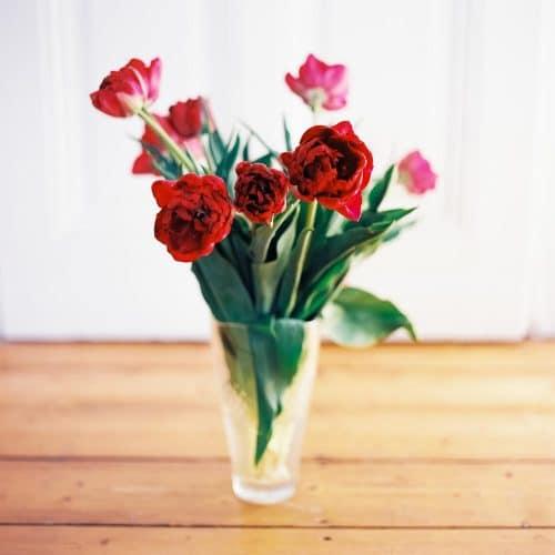 Tulpen bei Sonnenlicht
