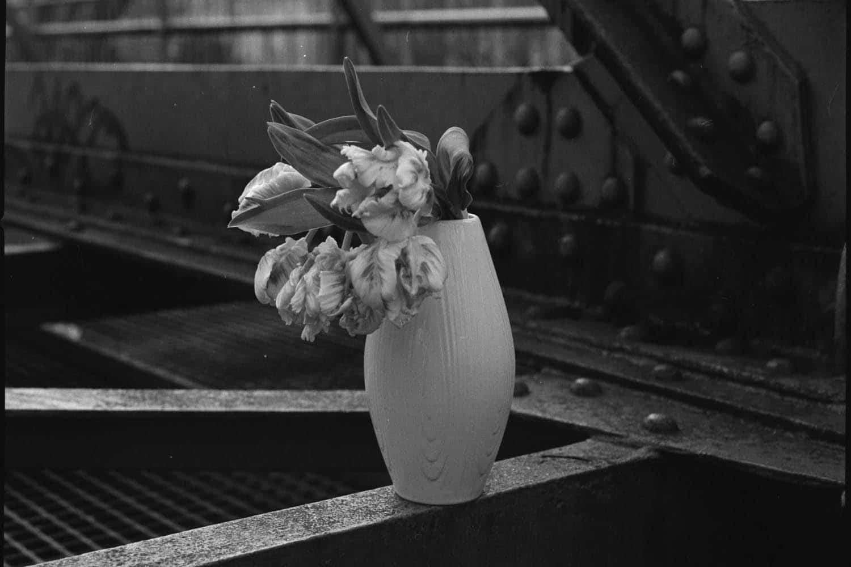 Stillleben mit Tulpen auf der Schwebebahn