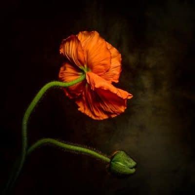 Blumenfotografie