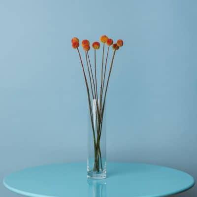 Florales Stillleben im Fotostudio