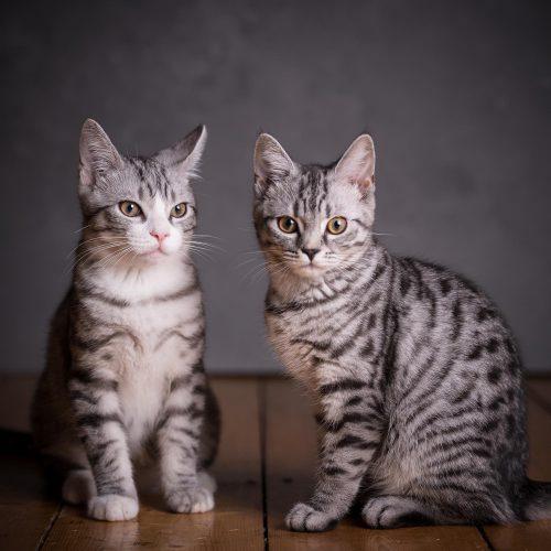 Katzen im Fotostudio